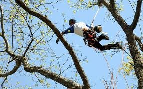 Tree Trimming - Complete Tree Services Inc.