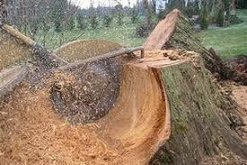 Stump Removal / Stump Grinding - Complete Tree Services Inc.
